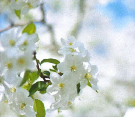 Diffusion de parfum : floral